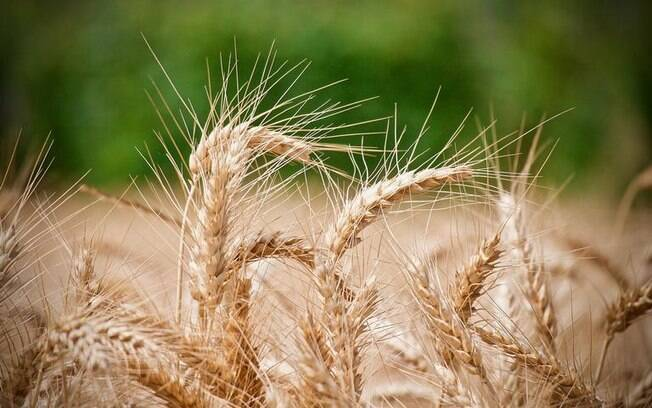 Simpatia com farinha de trigo: chama dinheiro e afasta rival