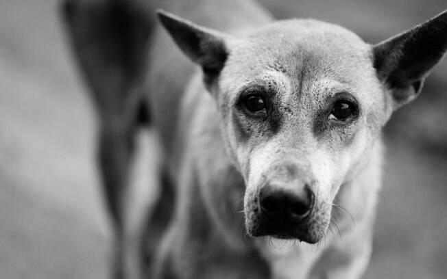 Um dos efeitos do hipertireoidismo é a magreza extrema dos animais.