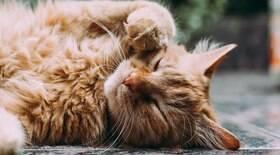 6 motivos para não ter um gato como animal de estimação