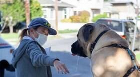 Cão e carteira viram melhores amigos