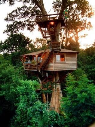 Para construir uma casa na árvore, a espécie deve ser adulta e ter copa saudável, volumosa e cheia