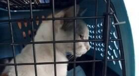 Polícia apreende gato usado para transportar drogas para presídio