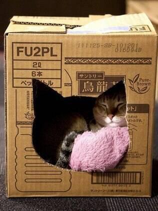 Caixas de papelão podem deixar um gato muito feliz