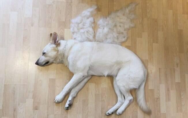 Dona fez 'obra de arte' com o pelo caído do cão para falar sobre adoção