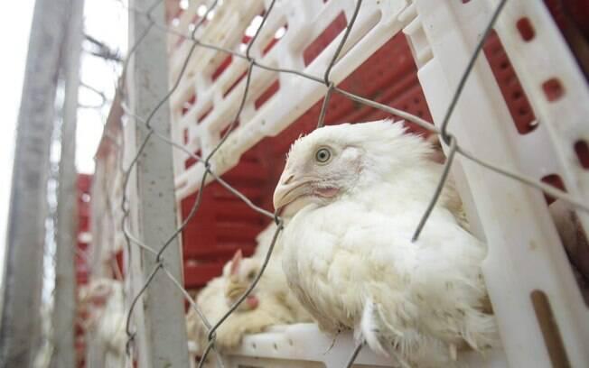 China diz que frango vindo do Brasil tem novo coronavírus