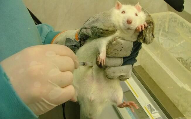 O primeiro país que baniu os testes em animais  foi a Alemanha em 1968, a prática se estendeu à UE em 2004