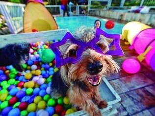 Aposta.  Ideia da empresária surgiu quando percebeu que cães e seus donos tinham poucas opções de lazer para se divertirem juntos