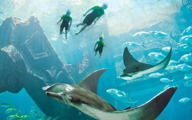 Mergulho com animais marinhos no Atlantis