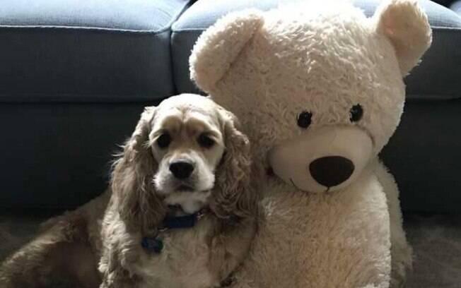 O cão Habs nunca se separa de seu urso de pelúcia, pois são grandes amigos