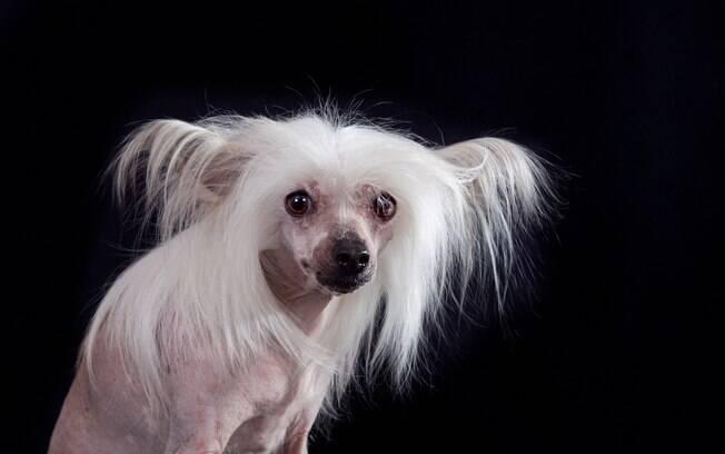 O prêmio de cachorro mais feio do mundo foi justificável