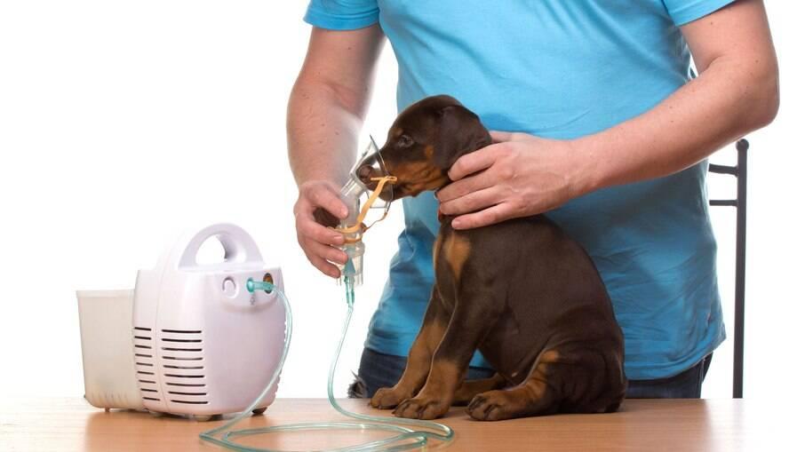 Cães também podem ter problemas respiratórios, como a gripe