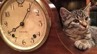 Sons e cheiros da rotina ajudam os pets a saberem que horas são