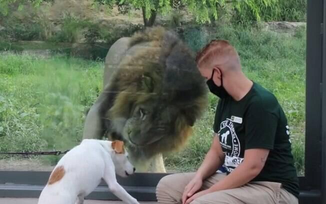 Animais de abrigo viajam para visitar zoológico