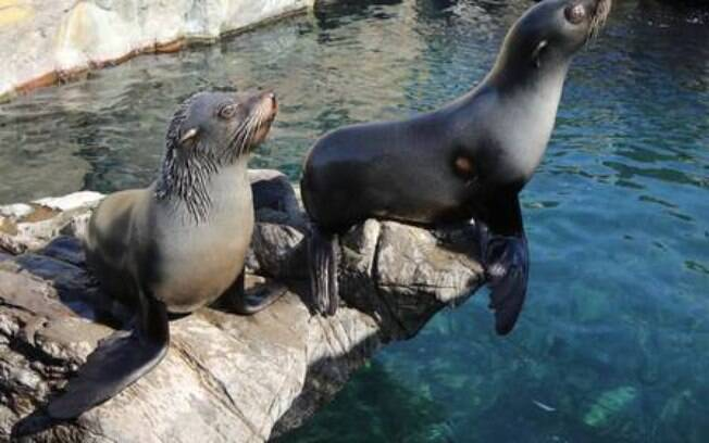 Animais do zoológico Living Coasts