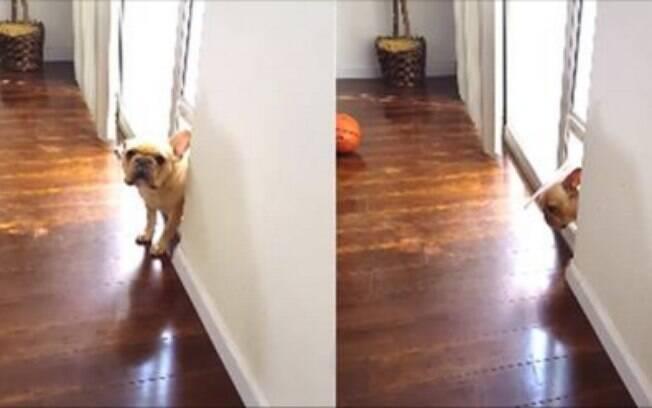 Cachorro saindo de fininho.