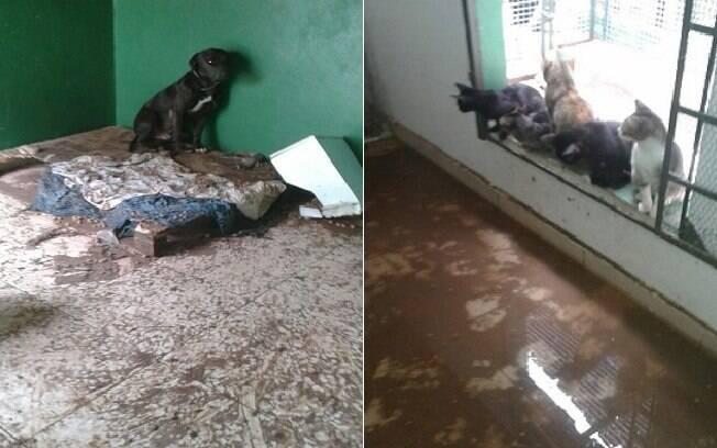 A ONG Ministério Arca de Noé sofre com as chuvas em Belo Horizonte