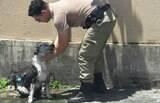Policial dá banho em cachorro que desmaiou na rua devido ao calor