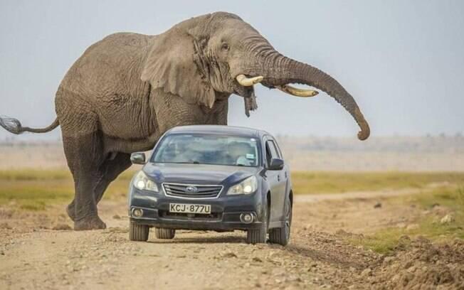 Cena foi registrada pelo fotógrafo de vida selvagem Mwangi Kirubi.
