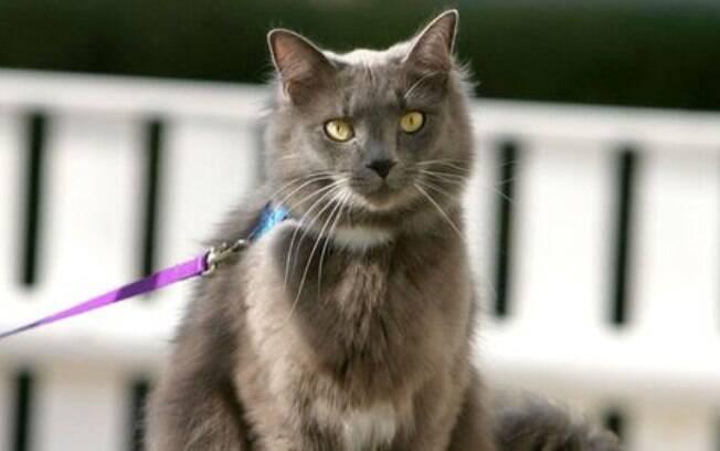 Conheça melhor esse acessório de felinos; a coleira para gatos