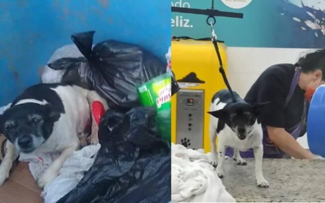 Cadela doente é resgatada de lixeira