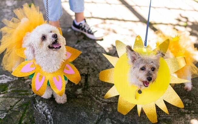 Também é possível curtir o carnaval com os animais de estimação