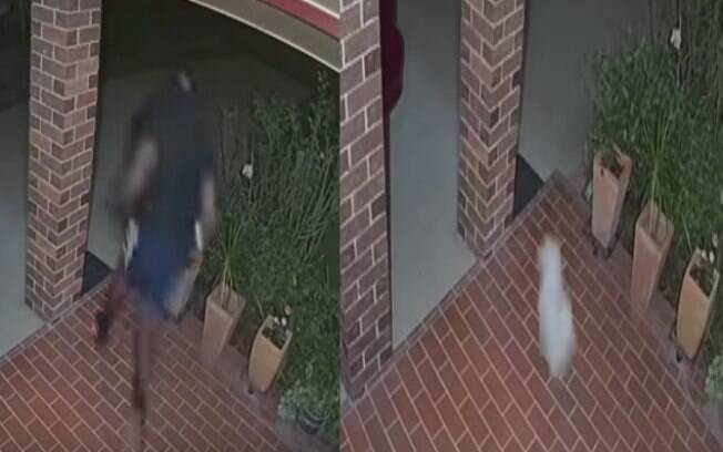 O cachorrinho Marley perseguiu ladrões que invadiram sua casa