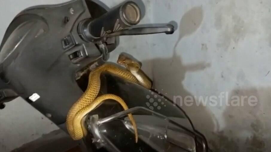 Na Índia, cobra é resgatada após ser encontrada enrolada em moto