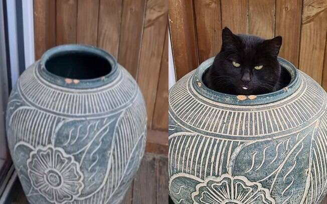 Mulher cai na risada ao descobrir onde gatinha se esconde