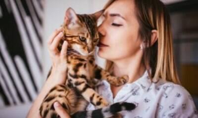 O que fazer quando o gato é diagnosticado com FIV ou FeLV?