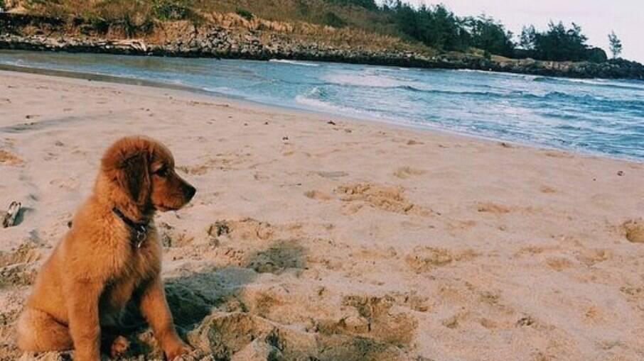 Antes de levar animais de estimação à praia é preciso ter alguns cuidados, como prevenir o verme do coração