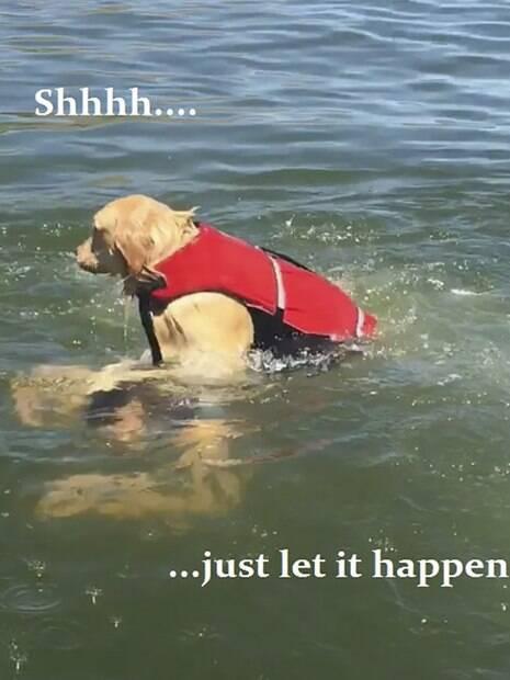 As fotos do cãozinho se tornaram meme no Twitter