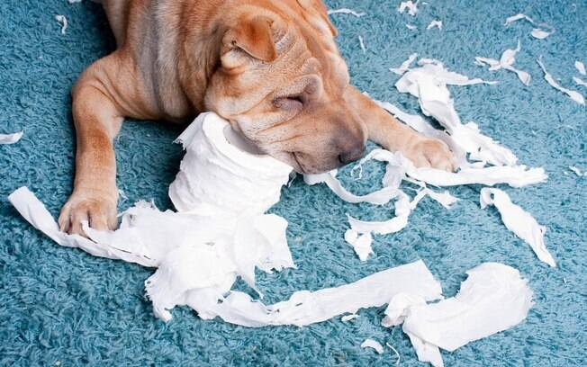 O seu cãozinho ama destruir papéis? Entenda o motivo