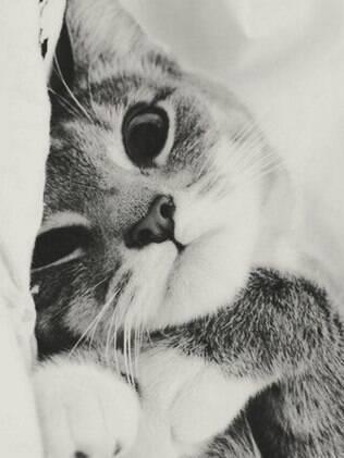 A história de que os gatos possuem sete vidas não passa de um mito