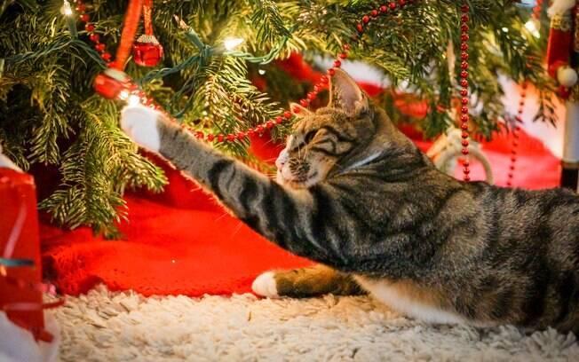 Todos os anos, gato travesso destrói as árvores de natal e toda a decoração feita pelo donos. Confira dicas para evitar isso