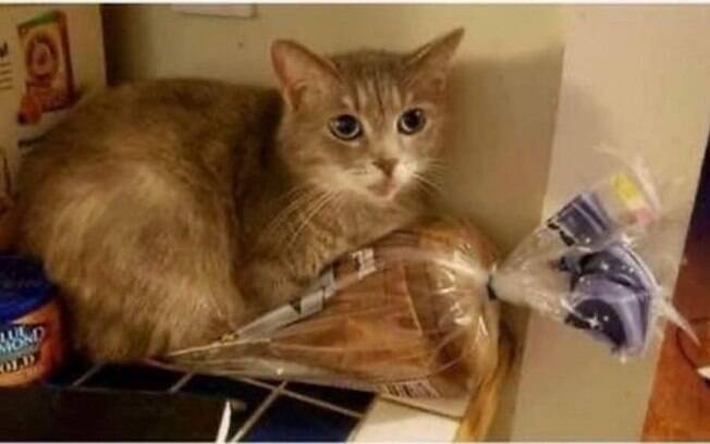 Gata folgada em cima de sacola de pão