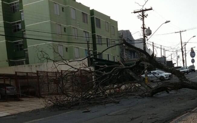 Vento forte derruba árvores em Campinas, diz Defesa