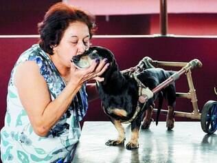 Superação. Com dedicação da dona, Maria da Conceição, o cãozinho Pepe conseguiu superar uma lesão na coluna e voltou a andar