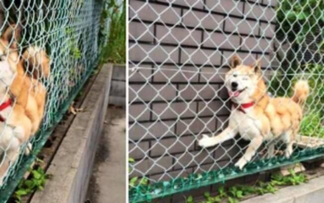 Cachorros que acabaram ficando presos.