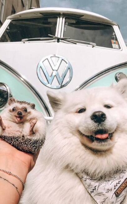 ouriço ao lado de cachorro