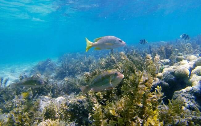 Além das jubarte, Abrolhos é o lar de belos arrecifes de coral, que são atrações entre dezembro e junho