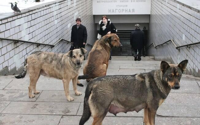 Cachorros de rua eram preocupação de autoridades russas para Copa do Mundo
