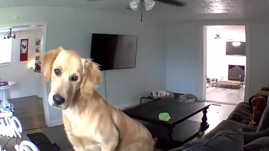 Cachorro ouve voz de tutor vindo de câmera e fica intrigado