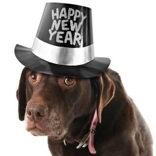 O que para os humanos marca o auge da alegria é um suplício para os cães