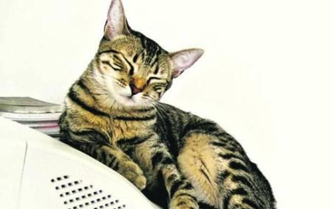 Gato é segundo a testar positivo para COVID-19 após caso confirmado na Bélgica