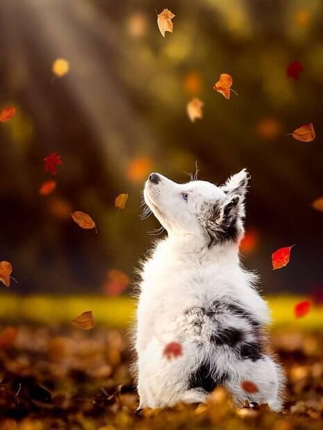 Confira a galeria de fotos que exalta a beleza canina