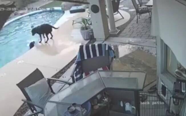 Cão salva melhor amigo canino de um possível afogamento