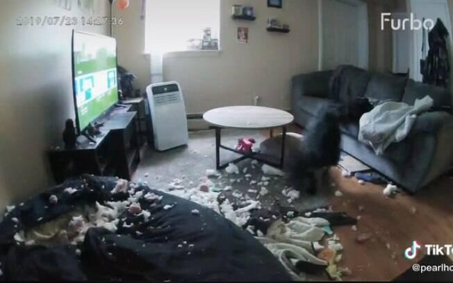 Cachorro destruindo estofado