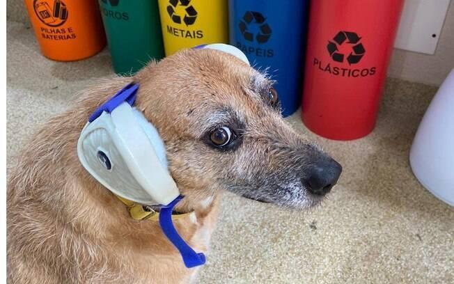 Cãozinho usando um fone de ouvido próprio para cães