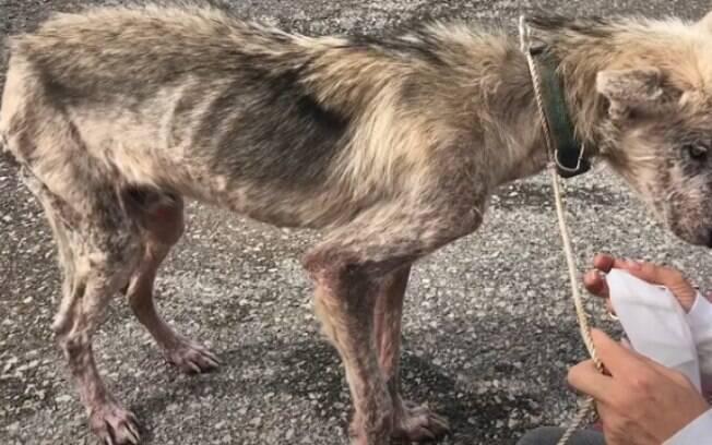 Confira impressionante antes e depois de cão maltratado por 2 anos