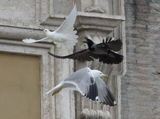 Corvo e gaivota atacam pomba da paz libertada por papa Francisco (26/01/2014)